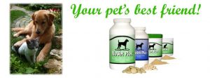 Your pet's best friend with dog and cat