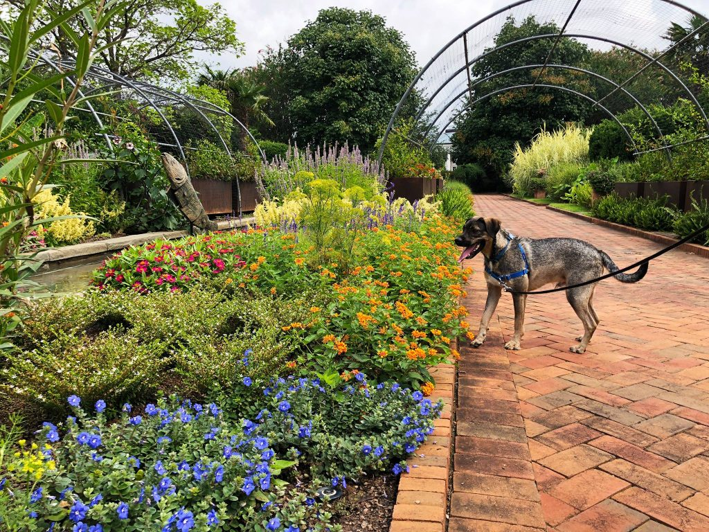 Dogs at Daniel Stowe Botanical Garden