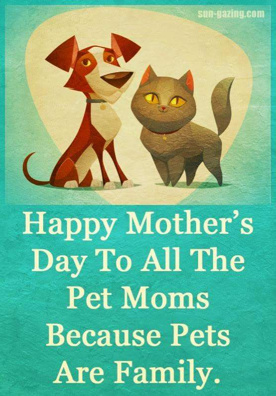 Happy Mother's Day to all the pet moms because pets are family.