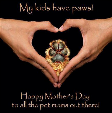 Happy Mother's Day to all the pet moms out there.