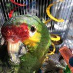 Charlotte Dog Walker & Parrot