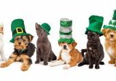 Happy St. Patrick's Day with Pets